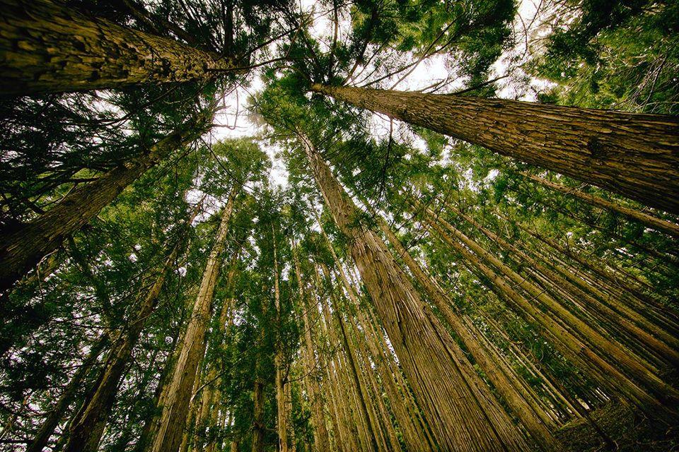 ripopolamento foreste